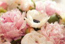 hana / flowers, flower, rose, çiçek, baby's breath