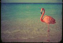 Flamingos / Wir sind die Radflamingos. Das sind die echten Flamingos. Wunderschön, oder?