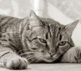 Mascotas: Gatos