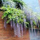House: Jardínería