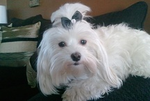 My Maltese Lola, makes me smile!