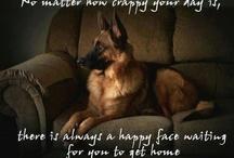 German Shepherds / My favorite dog  / by Liz Dawson