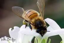 Let It Bee / by Ginny Ellis