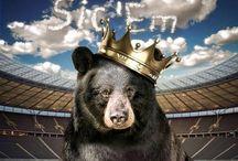 Sic 'Em Bears! / by Ginny Ellis