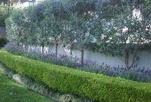 Gardens, plants & flowers