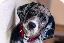 puppy love / by Celeste G.