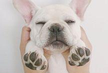 Love Bulldog