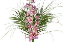 Bouquets unifleur / Une fleur, un bouquet, un message. Tous nos bouquets unifleur sur notre site / by Des Fleurs Pour Tous