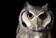 Birds of prey / Owls