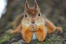 Squirrel / squirrel