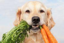 Artige  hund / Gøye ting en kan lage til hunden og som hunden gjør + Ting som har med hunder
