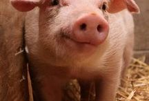 Pigs / by Debbie Rossiter