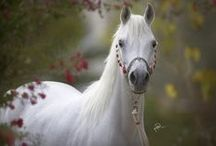 Horses / by Jannice lam