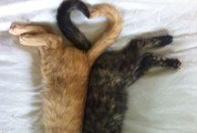 Animals / Cute & funny animals