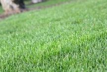 Look at those lawns / A great lawn deserves to be appreciated. Here you will find shots of some the lawns we are loving!