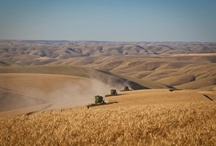 Landscape Dayton Washington / Located at the southern tip of the fertile, rolling Palouse region, Dayton is the gateway to the Wenaha-Tucanon Wilderness area and the Blue Mountains. It's a beautiful destination for recreation, photography and sightseeing.