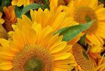 Yellow, sun & happiness