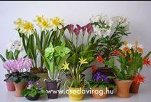 Clay flower - Agyagvirág / Clay flower - Colors, shapes and sizes ... Agyagvirág - Színek, formák, méretek...