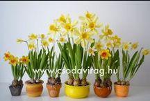 Clay flower 1 - Agyagvirág 1 / Clay flower - Variations on a theme ... , Agyagvirág - Variációk egy témára...