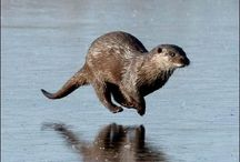 Adorable Otters / Otter cuteness!