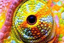 Animalillos / Dibujos, pinturas, esculturas de animales de todo tipo.