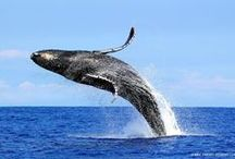 Whales! <3