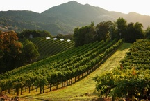 Napa Valley   Pictures