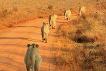 African Animals I love