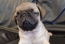 Chinston Pugsworth