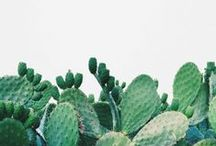succulents and other pretty plants