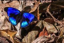 Butterflies / by Cassidream Photography