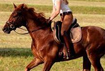 Equestrian / by Nicole Noyes