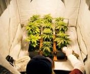 How To Grow Weed / Learn to grow weed the logic way with Grass Logic !