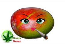 Grass News
