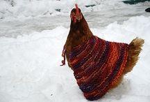 Chickens / by Zabrina Baca