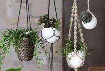 P o t P l a n t i n g / plants, pots and groupings