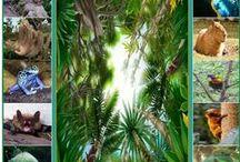 Regenwoud Brazilie