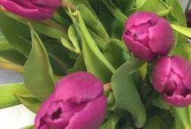 Flowers/Virágok