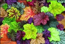 Kasvit / Kauniita kasvikuvia