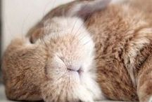 Best Bunny / Rambo