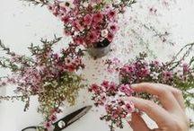 Flowers / www.tintacorda.com
