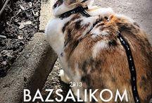 Bazsalikom / My bunny, Bazsalikom