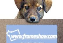 Animal/Pet Photo Frames and e-cards / In this board you can find animal/pet photo frames and e-cards.