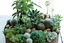 Green fingers / Gardening