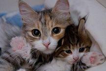 Kittens :-)