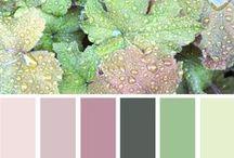 Color Plettes