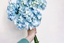 greens & blues //