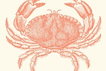 Salcombe Crab-tastic / Great crab related images via www.salcombefinest.com #salcombe #crab #holiday