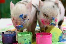 Critters - Babe, Wilbur & Friends / Pig, piglet, swine, sow, boar, hog - if it's of porcine persuasion, it just might be here