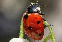 Critters - Beautiful Bugs